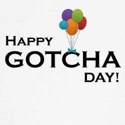 gotcha day